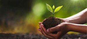 Volunteer for Fruit Tree Planting @ Aspen Gardens Park